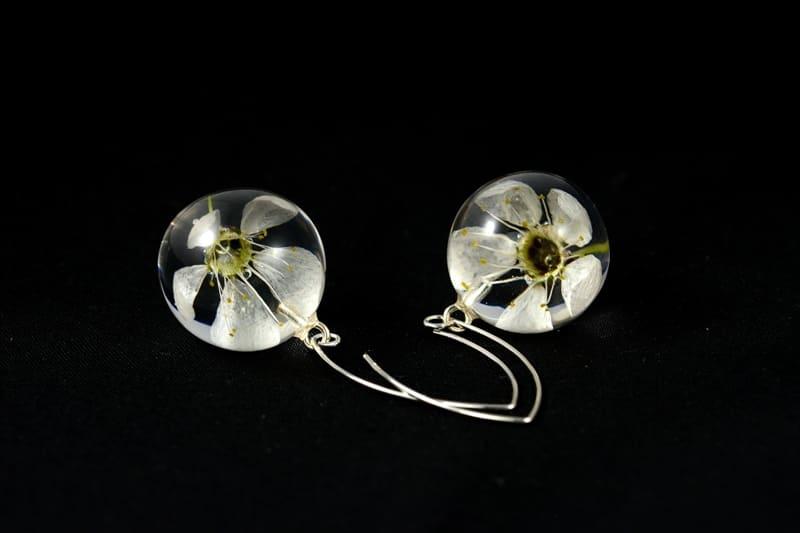 Kolczyki z kwiatami mirabelki (Prunus sp.)