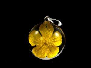 Zawieszka z jaskrem bulwiastym (Ranunculus bulbosus)
