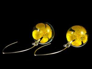 Kolczyki z jaskrami bulwiastymi (Ranunculus bulbosus)