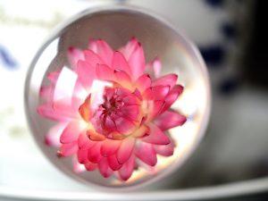 różowy nieśmiertelnik home decor